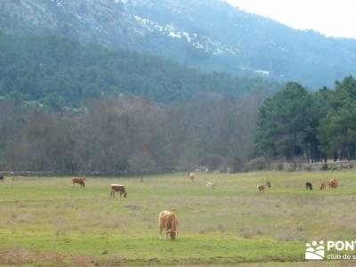 Fortines y Trincheras: Río Cofio; almanzor valverde de los arroyos rutas senderismo nacimiento del